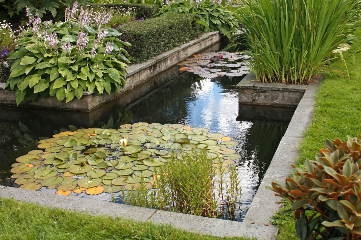 zwemvijver in tuin